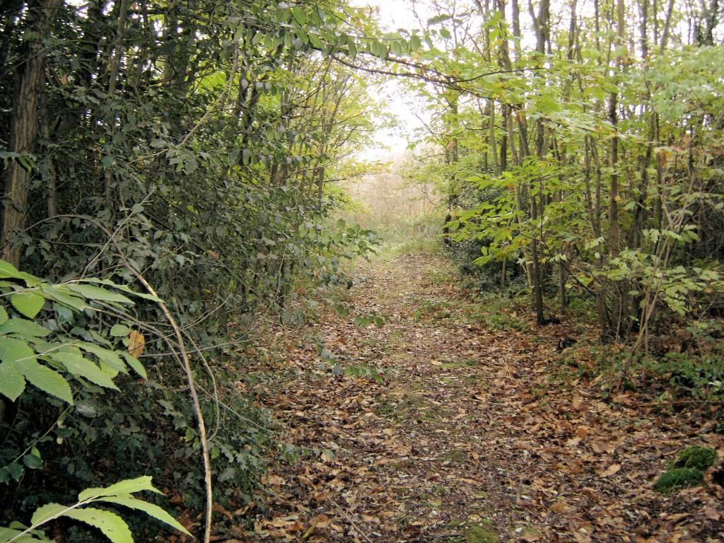 sous bois à ville sous Anjou
